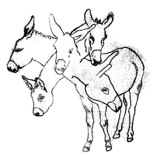illustration of an donkey with five heads